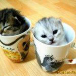 gatinhos anti estresse no copo