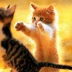 gato abraço contra estresse