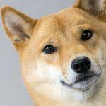 Dogecoin cresce rapidamente em véspera de lançamento de Dogethereum