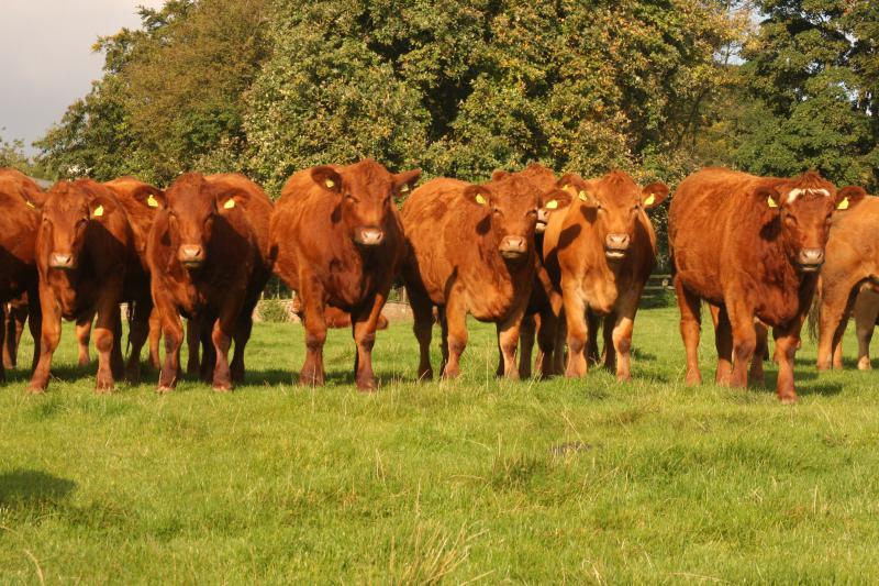 Uma manada é sempre algo muito prolifico, a melhoria das raças exigem cuidados genéticos constantes e a aquisição de elementos chave para que esse melhoramento de fato ocorra.