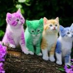 gatos power rangers