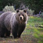 Bandeira do Urso: Bitcoin em queda para US$7 mil