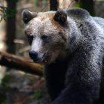 Sob a bandeira dos ursos: Bitcoin pode cair abaixo de US$6 mil em breve
