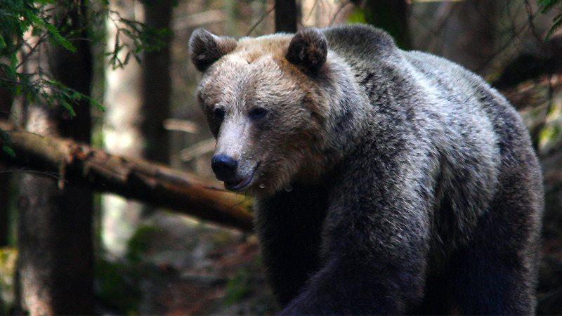 A semana passada terminou de forma triunfante para os ursos: o preço da Primeira Moeda caiu para um mínimo de dois meses.