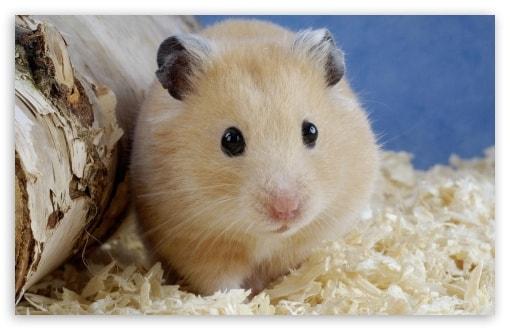 A Coinspot lançou o programa Hamster Insider, no Youtube, no qual um furtivo roedor supostamente prevê a direção do mercado para os próximos 10 dias.