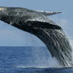 """Estudo: """"baleias"""" estabilizam mercado criptomonetário"""